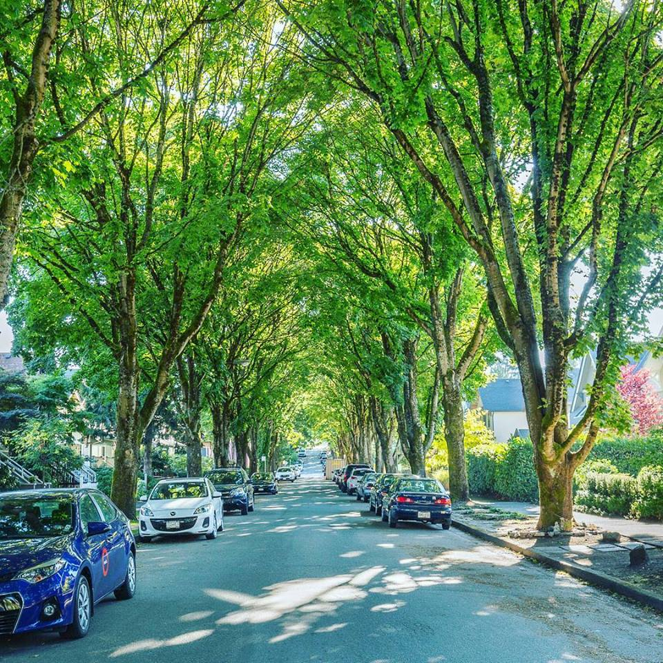 Tree lined streets of Campbell Residenses