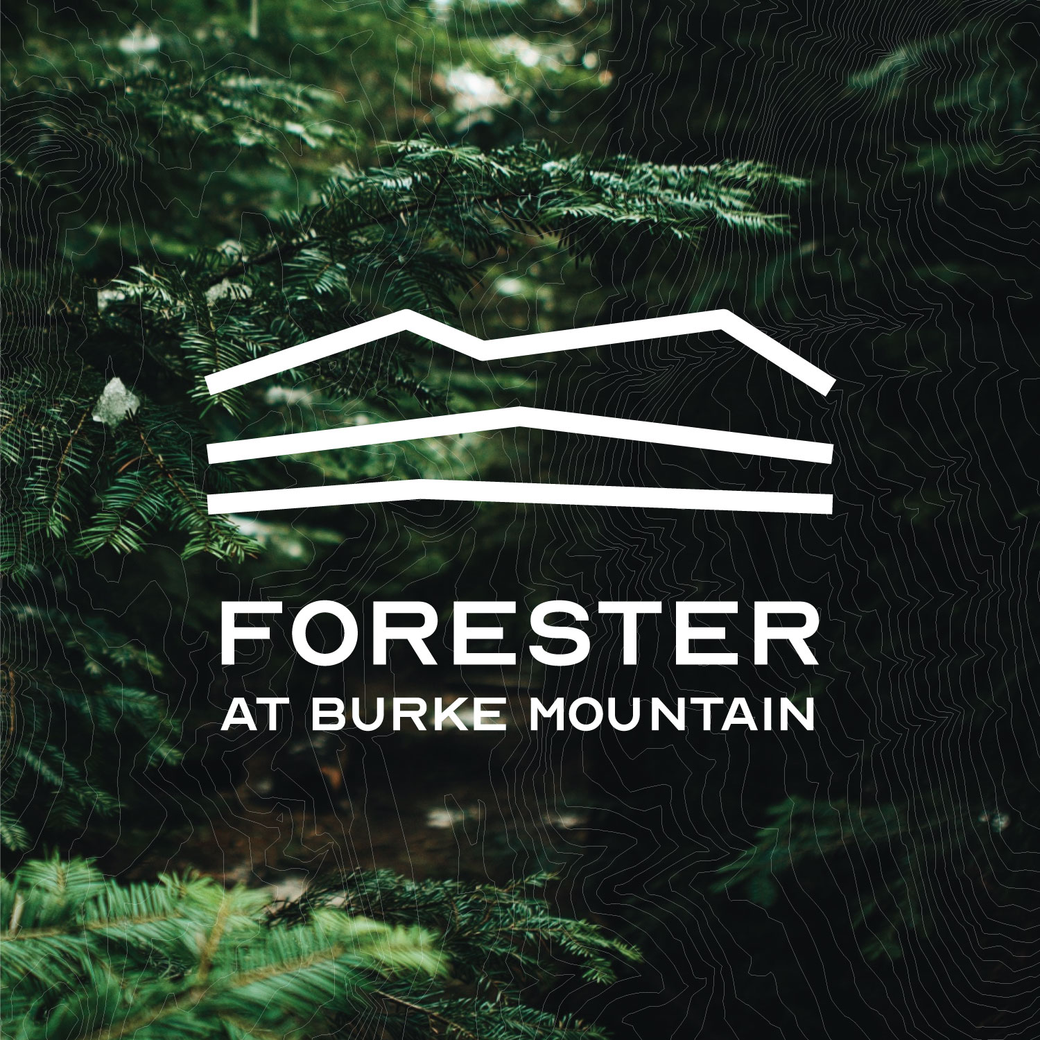Forester At Burke Mountain – Availability, Plans, Prices